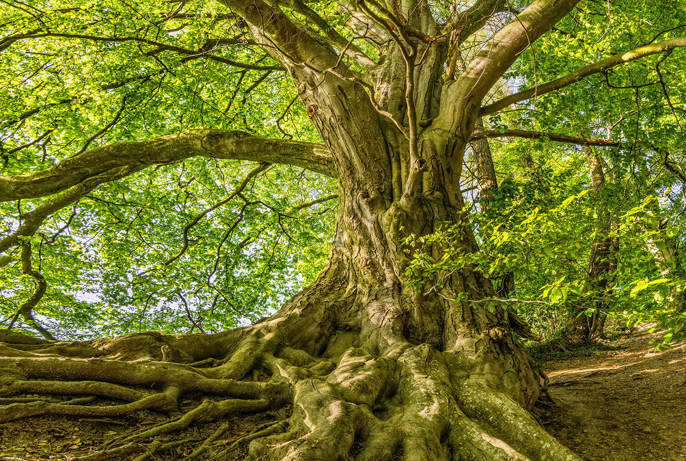 Tree root by Felix Mittermeier on Pexels
